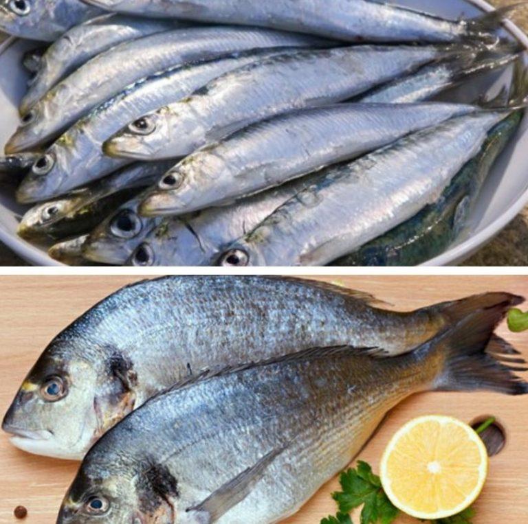 Картинки о пользе рыбы