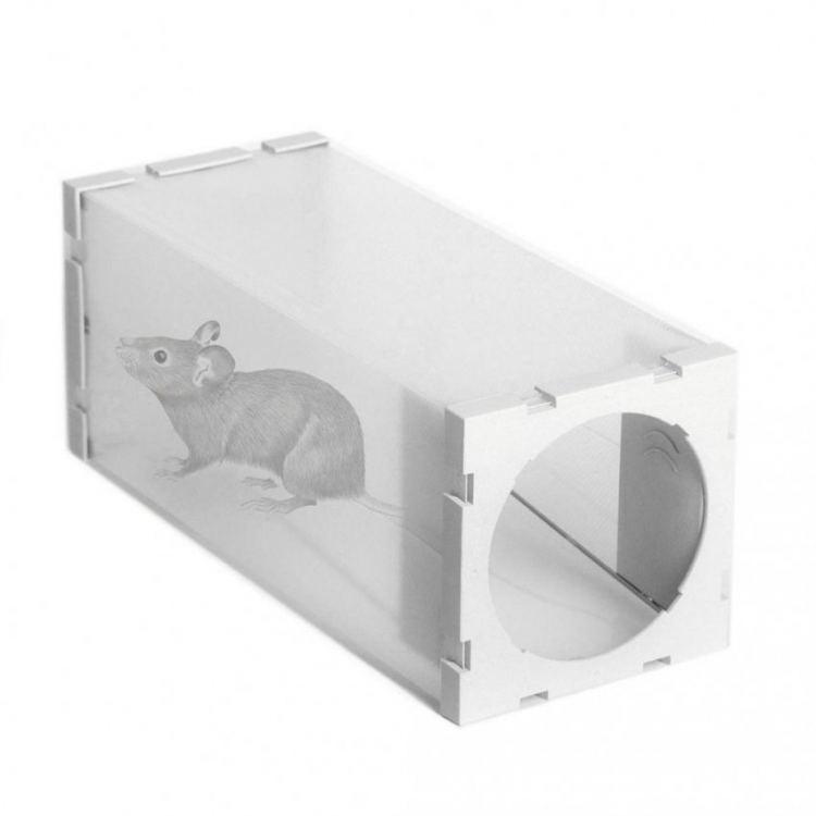 Лучшая приманка для крыс: способы уничтожения грызунов